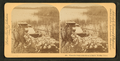 'Where the water lillies bloom in March.' - Florida, from Robert N. Dennis collection of stereoscopic views.png