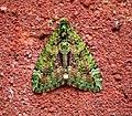 (1760) Red-green Carpet (Chloroclysta siterata) (30163767403).jpg