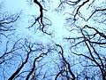 «Нервы» - panoramio.jpg