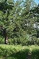 Андріївський ліс 06.jpg