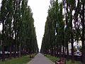 Бульвар Шевченка. Перед дощем.jpg