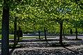 Верхний сад - 3.jpg