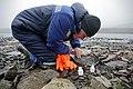 В поисках энтомофауны в высокоширотной Арктике.jpg
