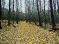Гомольшанские лес. Гайдары.JPG