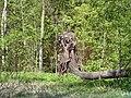 Дворцовый парк Гатчины-Palace Park in Gatchina - panoramio (9).jpg