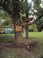 Дуб красный на территории Московского городского Дворца детского (юношеского) творчества.jpg