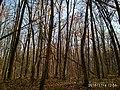 Еталонна діброва Вінницьке лісництво 3.jpg