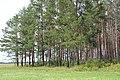 Лес на просвет. Новодеревенский лес. Чистопольский р-н. РТ. Август 2013 - panoramio.jpg