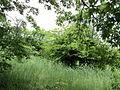 Парк шума Гази Баба во мај (116).JPG