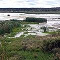 Семинский пруд - panoramio.jpg