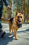 Собаки НГУ 5248 (19168528169).jpg