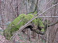 Староівковий ліс.jpg