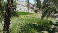 باغات و مزارع لاشار.jpg