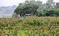গোলাপ গ্রাম, সাদুল্লাহপুর.jpg