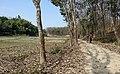 পশ্চিম পীর মহল্লাহ রবার্ট বাগান পাশের রাস্তা.jpg