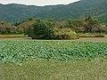 北条大池 - panoramio.jpg