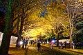 北海道大学(Hokkaido University) - panoramio (5).jpg