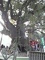 山宮神社 - panoramio (1).jpg