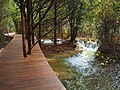 幽静的栈道 - Quiet Boardwalk - 2011.10 - panoramio.jpg