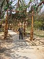 张家口公园 - panoramio.jpg