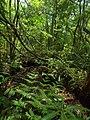浮島の森の中 - panoramio.jpg