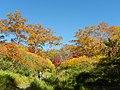 紅葉の径 - panoramio.jpg