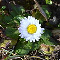 02014.12 Garten im Dezember-Blumen, Sanok.JPG