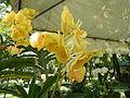 05593jfMidyear Orchid Exhibits Quezon Cityfvf 18.JPG