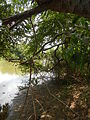 07834jfPampanga River banks Candelaria Welcome Calumpit Bulacan Roadsfvf 07.JPG