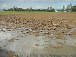 09461jfRoads Paddy fields Domesticated ducks Paligui Candaba Pampangafvf 22.JPG