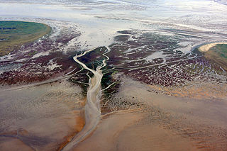 Tidal creek The portion of a stream that is affected by ebb and flow of ocean tides