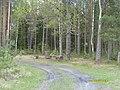11 Брянский лес Номинация Природа Котова Мариша.jpg