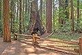 16 21 0040 redwood.jpg