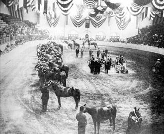 Southwestern Exposition and Livestock Show - Photo of a halter class at the 1908 show