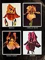 1945 Iris tulips daffodils (1945) (16669489522).jpg
