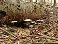 20021026 Zwart Water Paddestoel 03 (9928900484).jpg