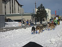 2008 Iditarod Anchorage (2311635515).jpg