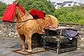 20090926 Makieta konia do pozowania do zdjęć na murach miejskich Suzhou 0541 5891.jpg