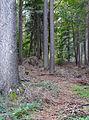 200910070924MEZ Limeswanderweg KK Windlücke - Wp 10-10 1.jpg