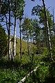2014, In the Deep Creek Range - panoramio.jpg