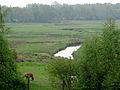 20140429 Drentsche Aa nabij Schipborg3.jpg