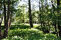 20140607Ponnholzbachtal.jpg