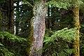 2018-04-01 Trees (26300401417).jpg