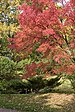 2020 Japanese Garden in Moscow - Autumn Colors 02.jpg