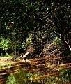 20210530 075334 Some Part of the Mognori River at the Savannah Region.jpg