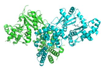Malonyl-CoA decarboxylase - Image: 2ygw