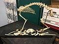 A House Cat's Bones.jpg