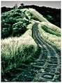 A Pathway to Heaven - Flickr - ^riza.jpg