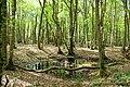 A black pond, Dering Wood - geograph.org.uk - 408487.jpg