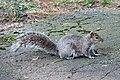 A squirrel... (487720388).jpg